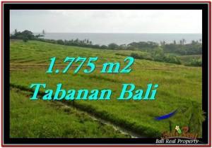 JUAL TANAH MURAH di TABANAN BALI 1,775 m2 di Tabanan Selemadeg