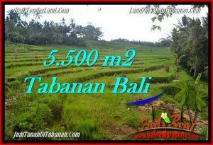 TANAH di TABANAN JUAL MURAH 55 Are View sawah, sungai dan gunung