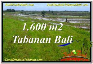 DIJUAL TANAH MURAH di TABANAN BALI Untuk INVESTASI TJTB310