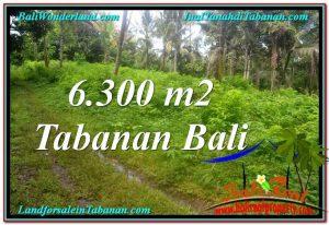 TANAH MURAH di TABANAN BALI DIJUAL Untuk INVESTASI TJTB313
