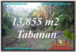 JUAL TANAH MURAH di TABANAN BALI 13,855 m2 View Kebun dan Sungai