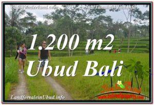 TANAH di UBUD DIJUAL Untuk INVESTASI TJUB624